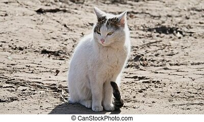 sad homeless white cat looking at the camera