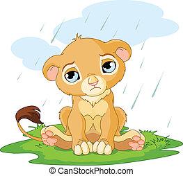 Sad lion cub - A cute character of sad lion cub on rainy day...