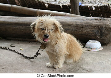 Sad little dog on a chain
