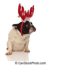 sad little french bulldog wearing christmas antlers
