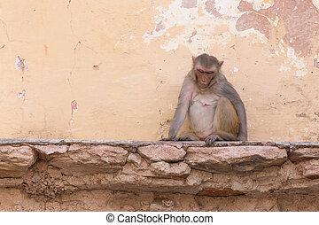 sad monkey sitting on ruins of old house
