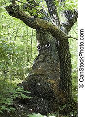 Sad old tree