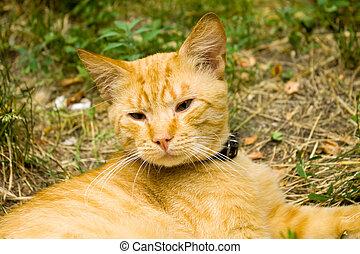 sad red cat