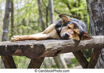 Sad stray hungry dog sleeping on wooden table in the forest.