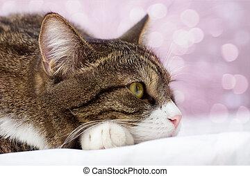 Sad, striped cat - Sad, gray, striped cat, lying and ...