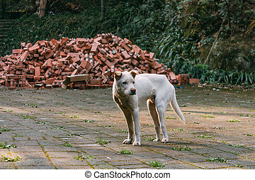 Sad white stray dog standing on a road in front of bricks and forest