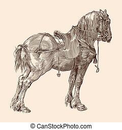 saddle., 말