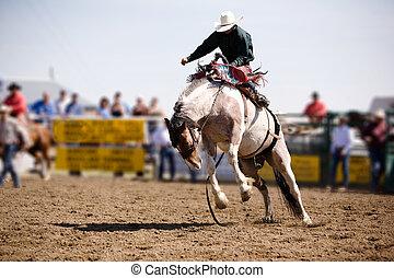 Saddle Bronc - A saddle bronc rider at a local rodeo