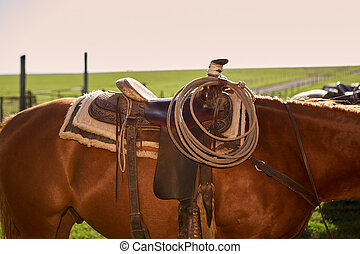 Saddled horse in close up view