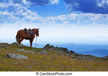 saddled horse in mountains - saddled horse near abyss edge...