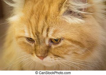 sadness cat