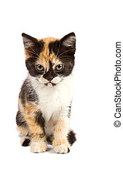 Sadness kitten sits - A sadnes kitten sits on a white ...