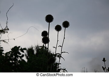 Sadness - Withering thistles in stormy weather with grey sky
