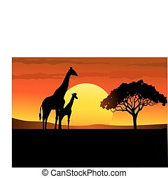 safari, afrika, solnedgang