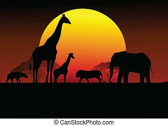 safari, afrikas, silhouette