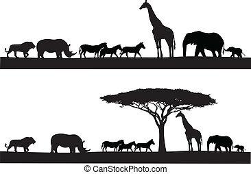 safari, animální, silueta