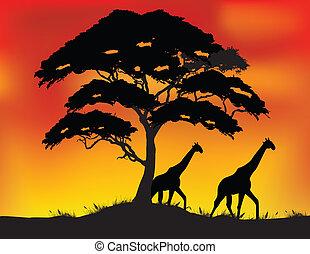 safari background