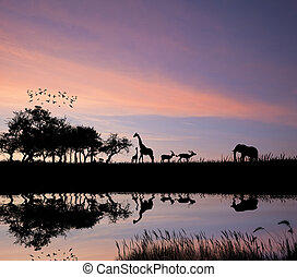 safari, dans, afrique, silhouette, de, lio