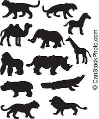 safari, dier, silhouettes
