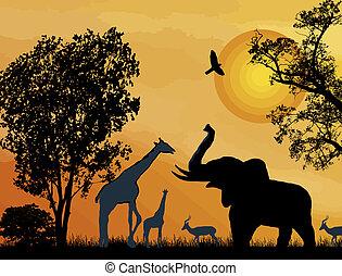 safari., fauna