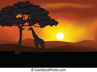 safari, fundo, silueta