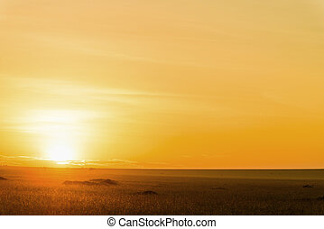 safari, kenya., afrikas, sonnenaufgang, prächtig