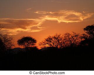 safari, sunset.