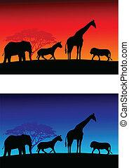 safari, tło