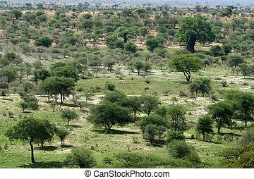 safari, -, tarangire, národnostní, park., tanzania, afrika