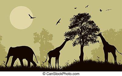 Safari wild animals silhouette