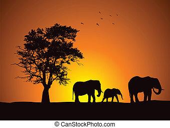 safari_elephants