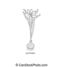 Saffron Hand Drawn Realistic Sketch - Saffron Medical Herb...