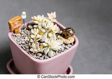 saftiger betrieb, graptoveria, mirinae, variegata, in,...