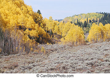 Sage Brush and Yellow Aspen