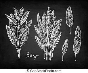 Sage chalk sketch on blackboard background. Hand drawn ...