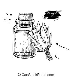 Sage essential oil bottle and sage leaves hand drawn vector illustration. Isolated plant drawing for Aromatherapy
