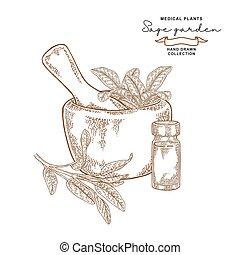Sage garden branch. Salvia essential oil. Medical plants set...