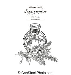 Sage garden flowers and leaves with glass bottle of essential oil. Medical herbs hand drawn. Vector botanical illustration. Engraving style.