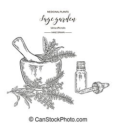 Sage garden plant, mortar and glass bottle of essential oil. Medical herbs hand drawn. Vector botanical illustration. Engraving style.
