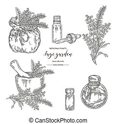Sage garden, Salvia officinalis plant set. Flowers, leaves of sage. Medical herbs hand drawn. Vector botanical illustration. Engraving style.