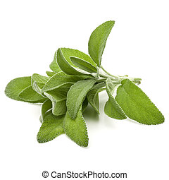 Sage herb leaves bouquet isolated on white background...