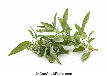 sage herb of the field reflected on white background