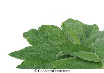 sage leaf 03