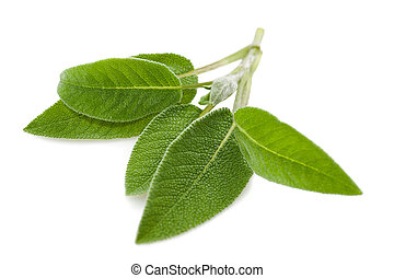 Sage leaves isolated on white