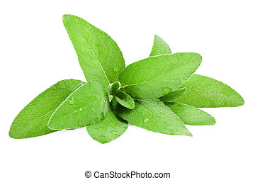 sage leaves wet isolated on white