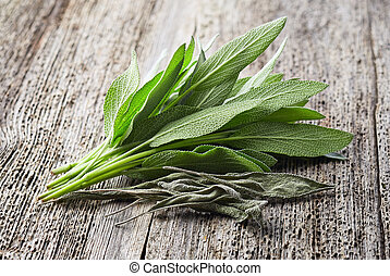 Sage plant. Fresh and dry