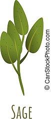 Sage plant icon, cartoon style - Sage plant icon. Cartoon of...