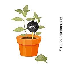 Sage Salvia in Pot Poster Vector Illustration