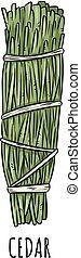 Sage smudge stick hand-drawn doodle isolated illustration. Cedar herb bundle