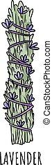 Sage smudge stick hand-drawn doodle isolated illustration. Lavender herb bundle